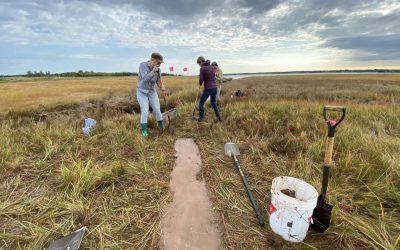 Building coastal resilience through restoring salt marshes